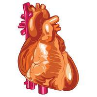Ilustração em vetor ilustração médica coração humano