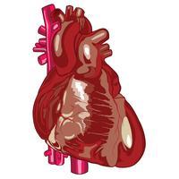 Ilustração em vetor de coração humano médico