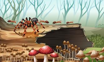 Aranha e formigas na floresta vetor