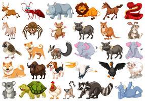 Conjunto de animal diferente vetor
