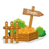 Fazenda frutas frescas
