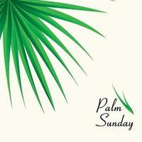 Fundo de domingo de ramos com folhas de palmeira vetor