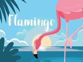 flamingo na água
