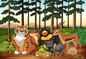 Animais selvagens que vivem na floresta vetor