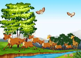 Veados e girafas na grama perto do rio