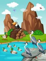 Pássaros e patos por uma lagoa vetor