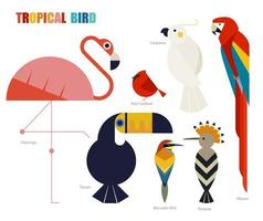 conjunto de pássaros tropicais geométricos. vetor