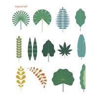 Conjunto de várias folhas tropicais