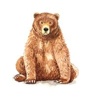 Retrato em aquarela de urso pardo sentado vetor