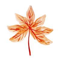 Elemento bonito de outono em aquarela