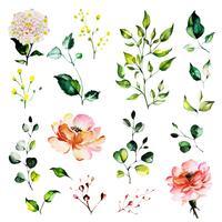 Folhas e bela aquarela floral vetor