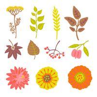 Conjunto de elementos florais de outono
