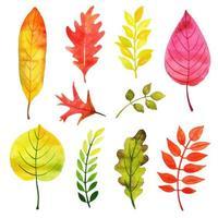 Folhas mudando coleção de cores vetor