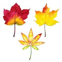 Coleção de folhas de outono