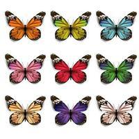 Conjunto de borboletas coloridas