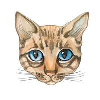 Cara de Gato. Aquarela. Ilustração vetorial Gato puro-sangue.