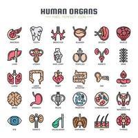 Ícones de linha fina de órgãos humanos vetor