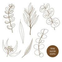 Eucalipto. Conjunto de mão desenhada de plantas cosméticas isolado no fundo branco. vetor