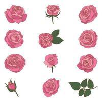 Conjunto de rosas vintage mão desenhada vetor