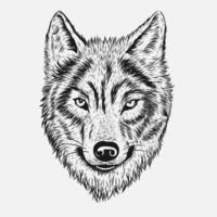 Cabeça de lobo mão desenho vetor