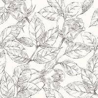 Desenho de rosas padrão vetor