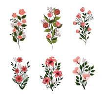 conjunto natureza flores plantas com pétalas e folhas