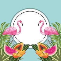 etiqueta do círculo com flamingo e frutas tropicais vetor