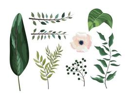 conjunto galhos exóticos deixa plantas e flores