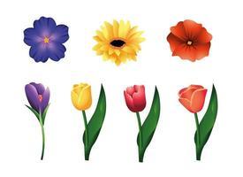 conjunto de flores e plantas de rosas com folhas