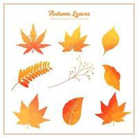 Coleção de folhas de outono em aquarela vetor