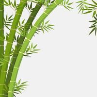 planta de bambu em fundo branco vetor