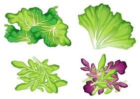 Um conjunto de vegetais de folhas vetor