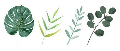 Folhas selvagens botânicas em aquarela em 4 estilos vetor