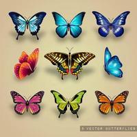Conjunto de borboletas coloridas do vetor