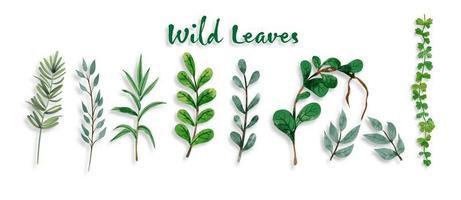 Conjunto de folhas botânicas e selvagens em pintura em aquarela. vetor