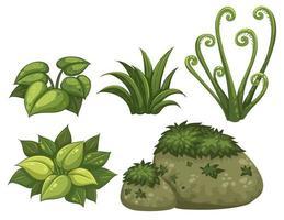 Conjunto de elementos da selva vetor