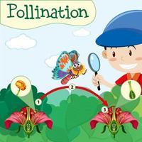 diagrama de polinização com menino e flor vetor