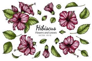 conjunto de desenho de flor e folha de hibisco rosa