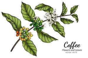 desenho de flor e folha de café