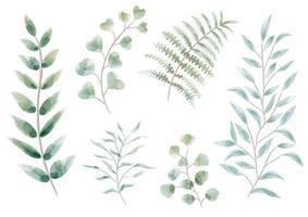 conjunto de elementos botânicos em aquarela vetor