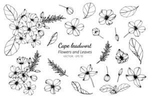 coleção de cape leadwort flor e folhas