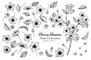 coleção de flores de cerejeira e folhas
