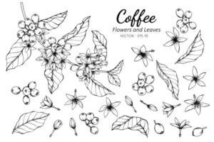 coleção de café flores e folhas
