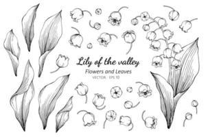 coleção de flores e folhas de lírio do vale vetor