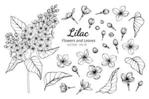 coleção de flores lilás e folhas