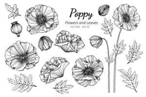 coleção de papoulas flores e folhas