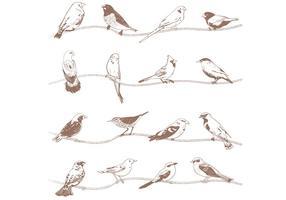 Vetores de pássaros desenhados a mão