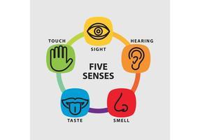 Infografia vetorial de cinco sentidos vetor