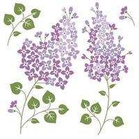flores lilás com conjunto de folhas vetor