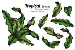 conjunto de desenhos de folhas de samambaia grossa vetor